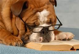 Dog Business Plan